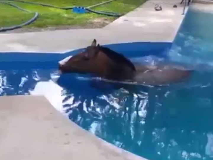 """Курйоз дня. У Яремче рятувальники діставали коня, який """"розслаблявся"""" у басейні популярного готелю"""