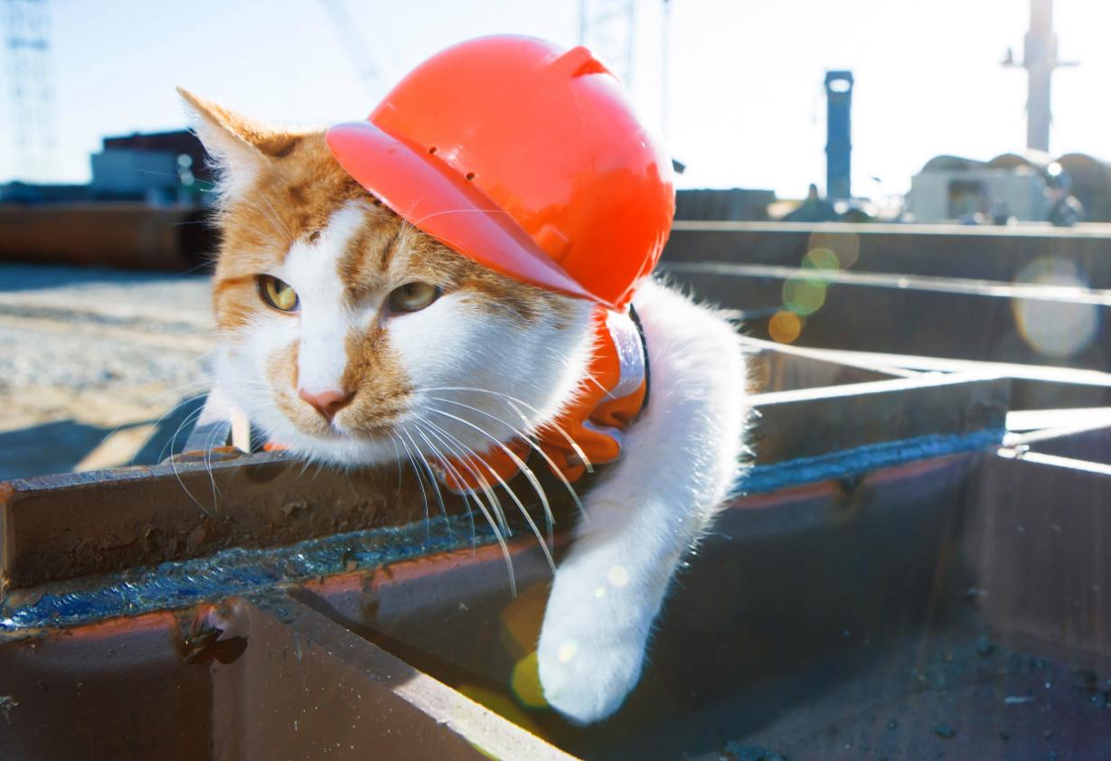 Кот Мостик «проголосовал» раньше доэтого строителей