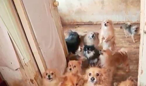 ВТюмени приставы вывезли изквартиры сто собак