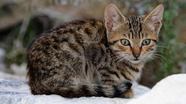 Живую кошку спасатели извлекли из-под завалов вгороде Шахты