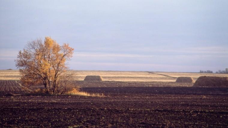 Петербург занял третье место позагрязненности почвы вРоссии