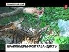 Браконьеры продавали на чёрном рынке шкуру уссурийского тигра