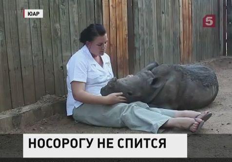 В ЮАР волонтеры выхаживают детеныша носорога
