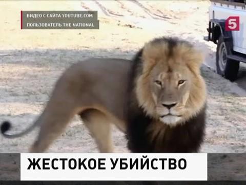 В Зимбабве начинается суд над американцем, убившем льва Сесила