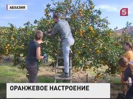 100 лет исполняется первой партии мандарин, отправленных из Абхазии