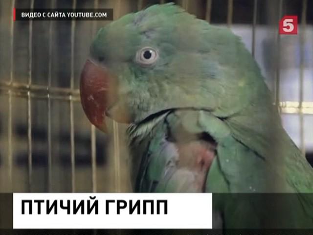 Птичий грипп в воронежском зоопарке. Усыпили даже краснокнижных пернатых