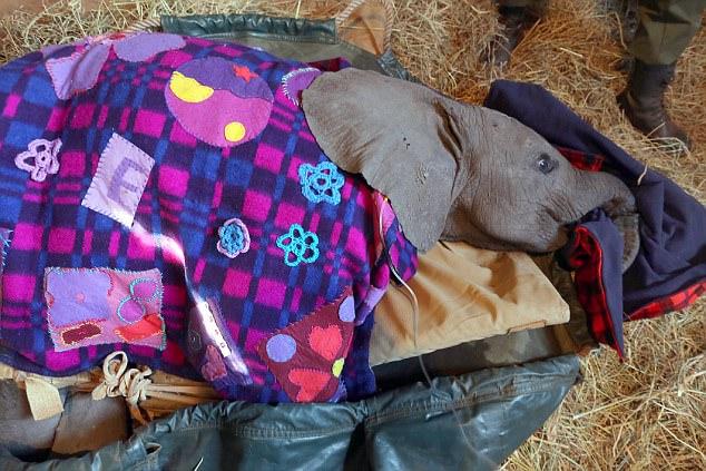 ВАфрике волонтеры спасли слоненка, пострадавшего отрук браконьеров ФОТО