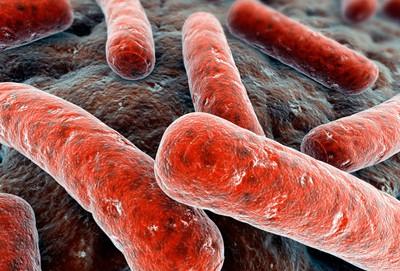 Российские биологи забилитревогу: найдена новая, суперустойчивая, мутация туберкулёзной палочки
