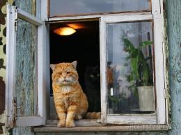 Хозяйка защитила свой дом при помощи кота