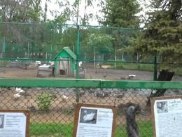 Живодеры, приготовившие шашлык изкраснокнижных птиц омского зоопарка, задержаны
