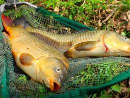 ВВоронежской области задержали рыбаков-воришек