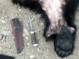 Под Иркутском задержали браконьера наквадроцикле, убивавшего медведей ради шкур