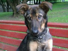 Работник московского приюта для животных забил собаку досмертиибросил еевколодец