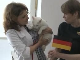 Эрмитажный кот-оракул Ахилл предсказал победителя Кубка конфедераций— это Германия