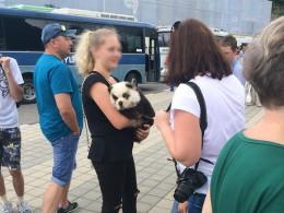 ВСочи прокуратура заинтересовалась фотографом сдетёнышем панды