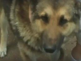 Наглазах удетей живодер расправился ссоседской собакой из-задвух задушенных куриц