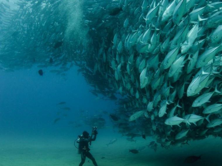 Организаторы готовятся кмеждународному рыбопромышленному форуму