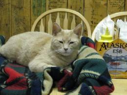 Почетный мэр города наАляске умер на21 году жизни