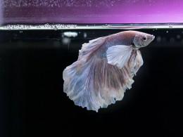 ВАмерике убийцу аквариумной рыбки посадили втюрьму