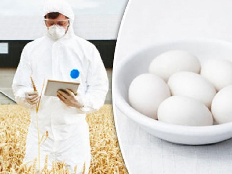 ВЕвропе сполок магазинов изъяли миллионы ядовитых яиц