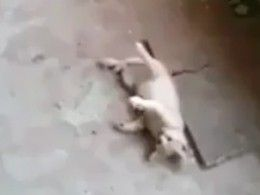 Школьницы изСамарской области,хихикая, убили котенка исняли все навидео