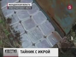 Тайники с6тоннами лососёвой икрынашли вМагаданской области