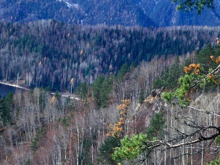 ВТихвинском районе Ленобласти нашли 100-летнюю отшельницу