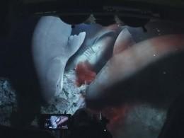 Аувас работа тяжелая?Журналистов BBC атаковали ревущие акулы