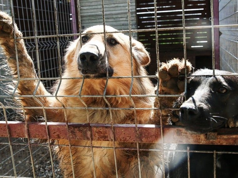Издевательства над животными могут привести втюрьму напять лет