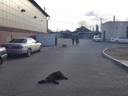 Отравленные собаки умирали встрашных муках вЧите