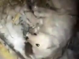 Житель Якутска облил свою собаку водой иоставил вбудке приморозе —30