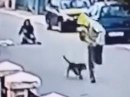 ВЧерногории неравнодушный иотважныйпес спас женщину отграбителя ипопал навидео