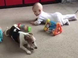 Вероятно, самый лучший друг человека: Джек-рассел-терьер учит малышку ползать