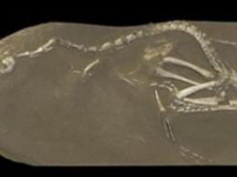 Учёные откопали очень зубастого прапрадедушку лебедя эпохи динозавров