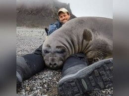 Американский фотограф завёл вАнтарктике200-килограммового друга
