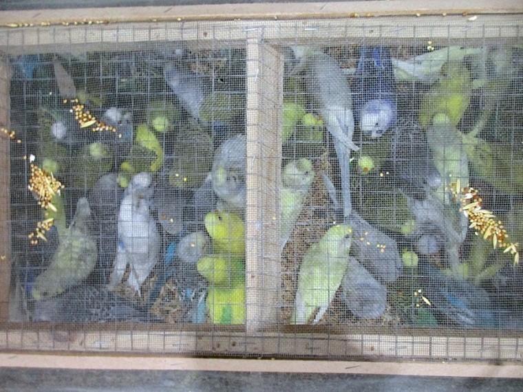 Три сотни попугаев прилетели вСанкт-Петербург