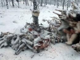 ВМинистерстве охраны природы республики Саха рассказали орастерзанных браконьерами оленях