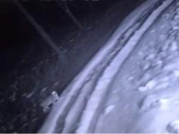 Видео: вНижегородской области три рыси пришли запищей клюдям