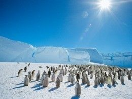 Экскременты помогли NАSА обнаружить сверхсекретную колонию пингвинов