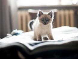 Обвиняемый впохищении котенка петербуржец рассказал свою версию происшествия