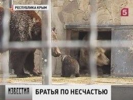 Двух медвежат, искалеченных жестоким хозяином, привезли налечение вкрымский сафари-парк