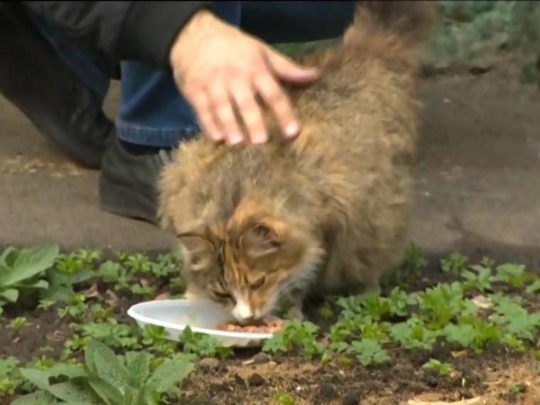 Зоозащитнику, помешавшему убивать кошек, грозит суд