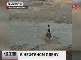 ВПриморском крае спасли жизнь диким птицам, пострадавшим отразлива нефтепродуктов