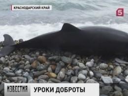 Наюге России открыли службу спасения дельфинов