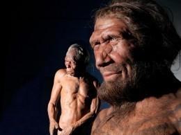 Палеонтологи намерены «воскресить» мозг неандертальцев