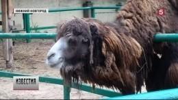 ВНижнем Новгороде из-за садистского обращения сживотнымизакрывают зоопарк