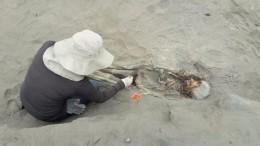 ВПеру нашли останки56 убитых вовремя языческого ритуала детей.