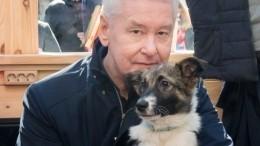 МэрМосквы спас бездомную собаку