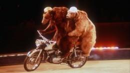 Видео: Медведь набросился надрессировщика вцирке под Волгоградом