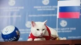 Белоснежный оракул ЧМ-2018 Ахилл выбрал победителя матча Россия— Египет